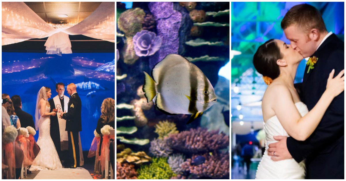 A collage of images showing weddings at the Oklahoma Aquarium and an aquatic exhibit.